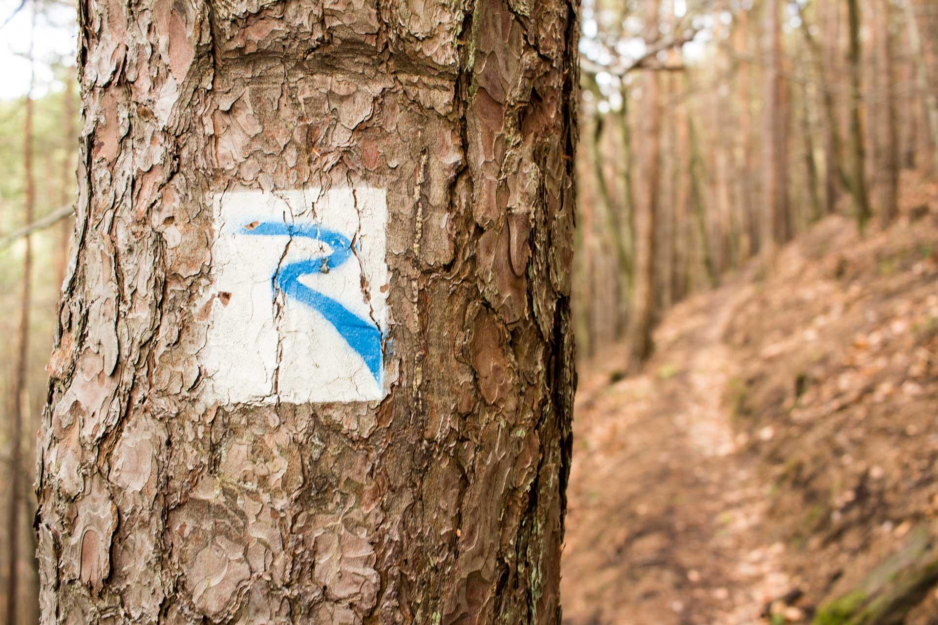 Rimbachsteig Pfalz